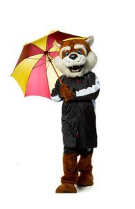 Blitz with an umbrella